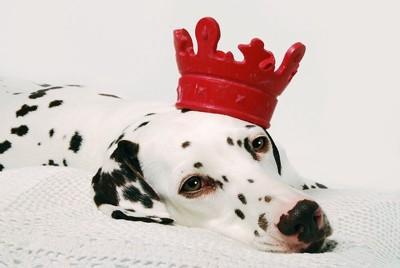 王様と思い込んでいる犬