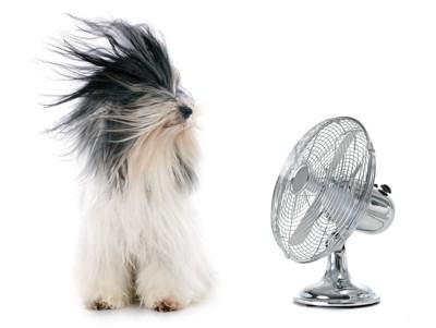 扇風機の風を浴びる犬