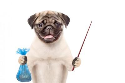 ウンチ袋と指し棒を持つ犬