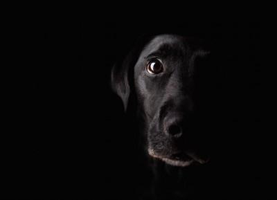 暗い背景に同化する黒い犬