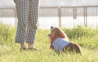 散歩中にお座りする犬