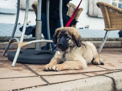 テーブル下で待っている犬
