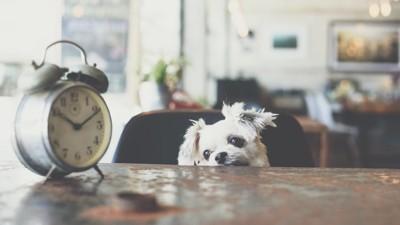 時計を見る犬