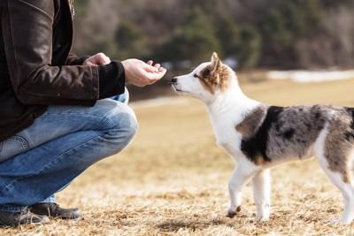 人からオヤツをもらう犬