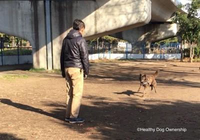 トレーニングする犬と人