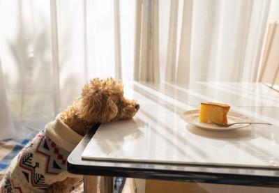 テーブルに顎を乗せてケーキを見つめる犬