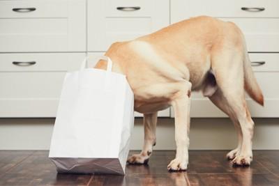 白い紙袋に顔を入れている犬