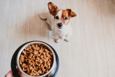 飼い主の持つドッグフードが入った器を見つめる犬