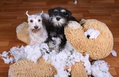 破壊されたヌイグルミと2頭の犬