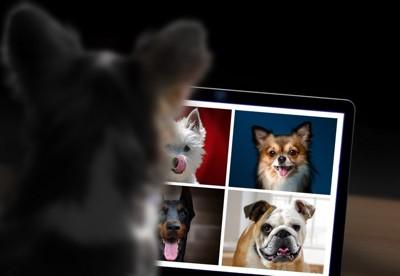 画面上の犬画像を見ている犬