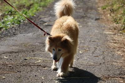 トボトボ歩く犬