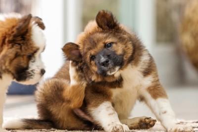 足で掻く犬