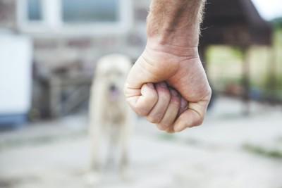 人の握りこぶしと遠くにいる犬