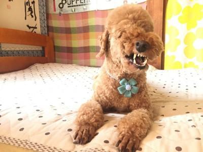 愛犬の変顔写真2枚目