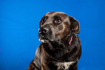 緊張した様子の犬