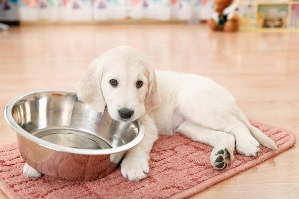 食器にかじりつく犬