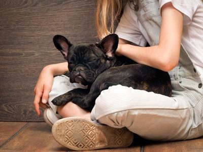 膝の上で寝る犬
