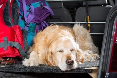 車で眠る犬
