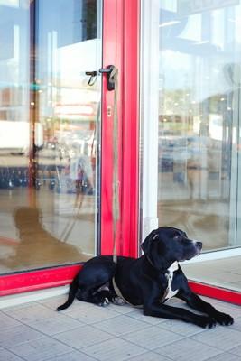 お店の扉の外に繋がれている犬