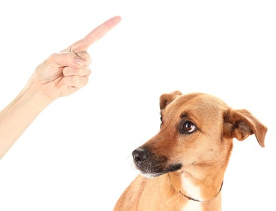 飼い主の叱る手と怯える犬