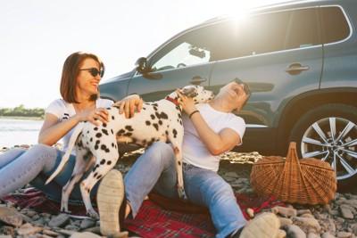 車の横で休むカップルに甘えるダルメシアン
