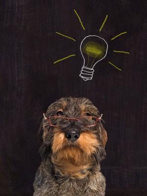 電球マークと眼鏡をかけた犬