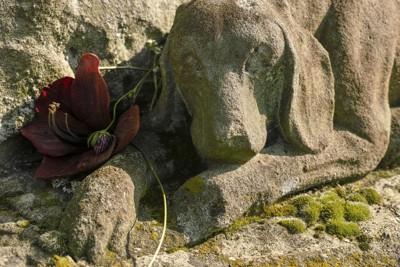 バラが添えられた犬の石像