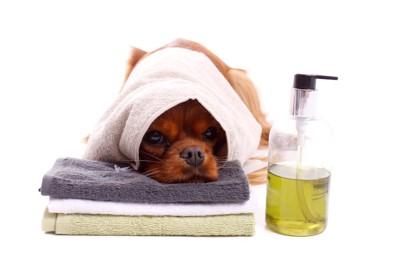 タオルを被った犬とボトル