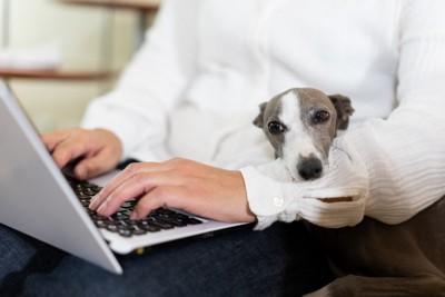パソコンを操作している男性と犬