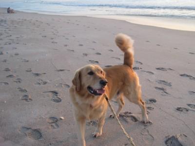 愛犬とビーチで