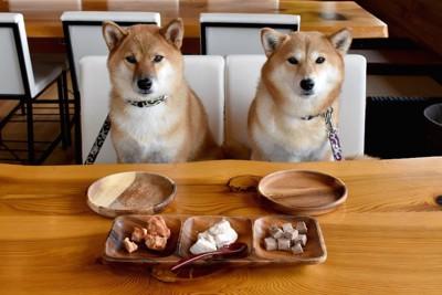 席に座ってごはんを待っている二匹の柴犬
