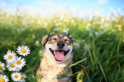 白い花と笑顔でこちらを見る犬