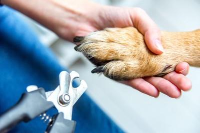 爪切り中の犬の手アップ