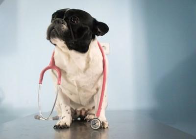 聴診器を首から下げた犬