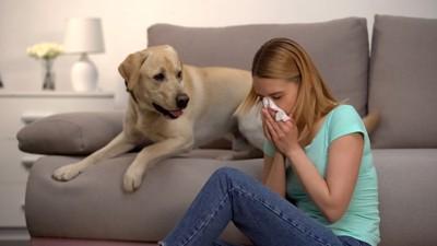 鼻をかむ女性と心配そうに見つめる犬