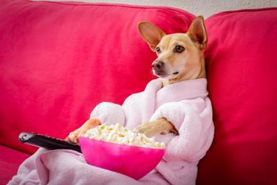 ガウンを着てポップコーンを食べる犬