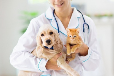 獣医師に抱っこされる子犬と子猫
