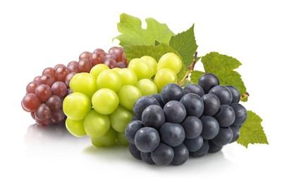 シャインマスカットと巨峰とデラウエアの葡萄