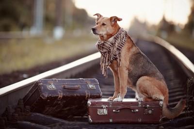 カバンを持って旅をしている犬