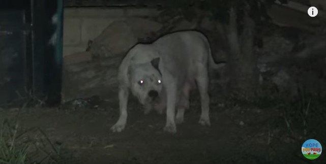 出てきた犬