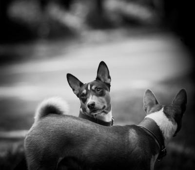 二頭の犬、モノクロ写真
