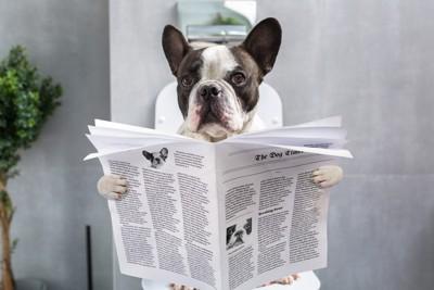 便器に座りながら新聞を読んでいる犬
