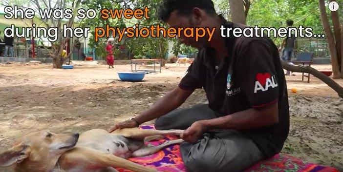 治療される犬