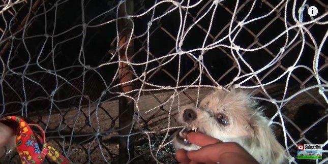 指を甘噛みする犬