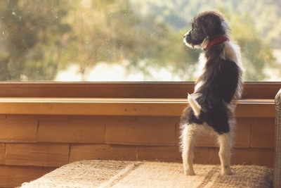 窓の外を眺める子犬
