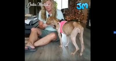 ピンクのベストを着た犬と女性