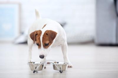 スタンドに置かれたごはんを食べる犬