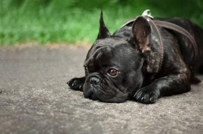 落ち込んでいる犬