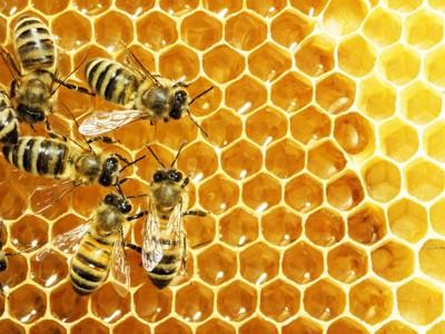巣の上のミツバチ