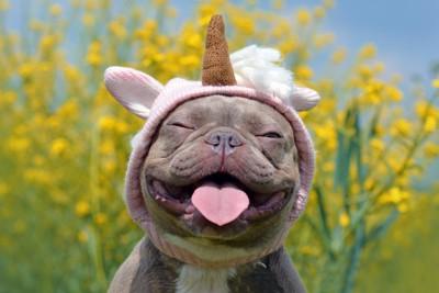 コスプレして笑っている犬